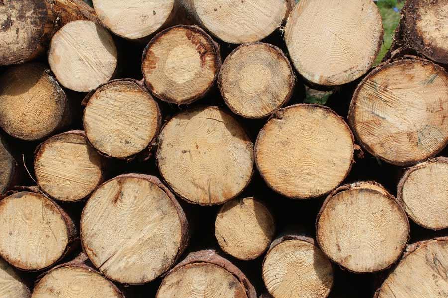 Baumstämme für Kaminholz zur Weiterverarbeitung in verschiedenen Größen
